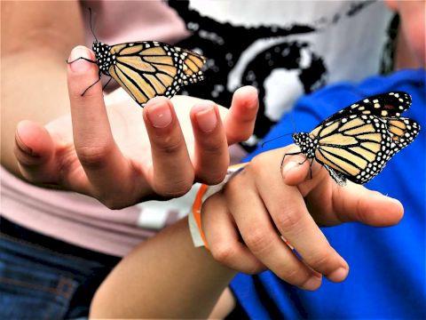 День Рождения в Биологическом музее «Удивительный мир бабочек»