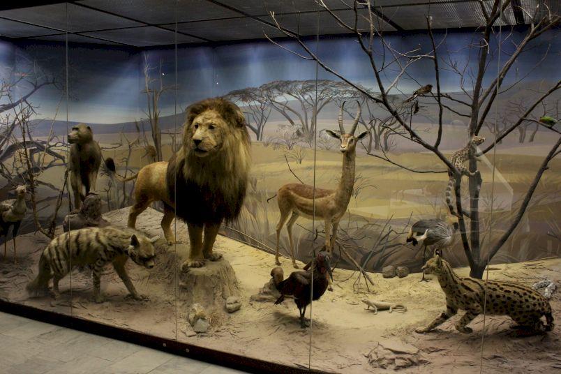 День Рождения в Дарвиновском музее «Удивительные обитатели Земли»