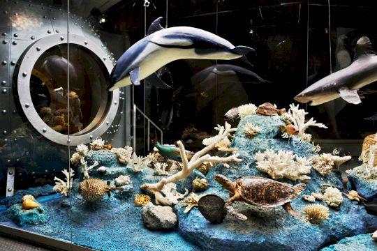 День Рождения в Дарвиновском музее «Земля и ее удивительные обитатели»