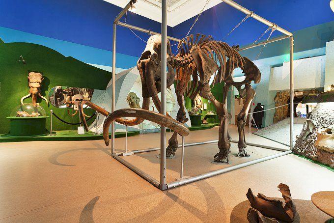 День Рождения в Ледниковом Периоде «Праздник в компании мамонтов»