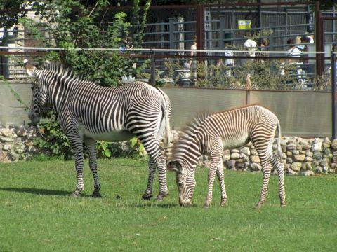 День Рождения в Московском зоопарке «По следам невиданных зверей»