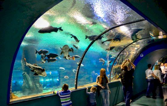 Москвариум. Кругосветное путешествие в морских глубинах