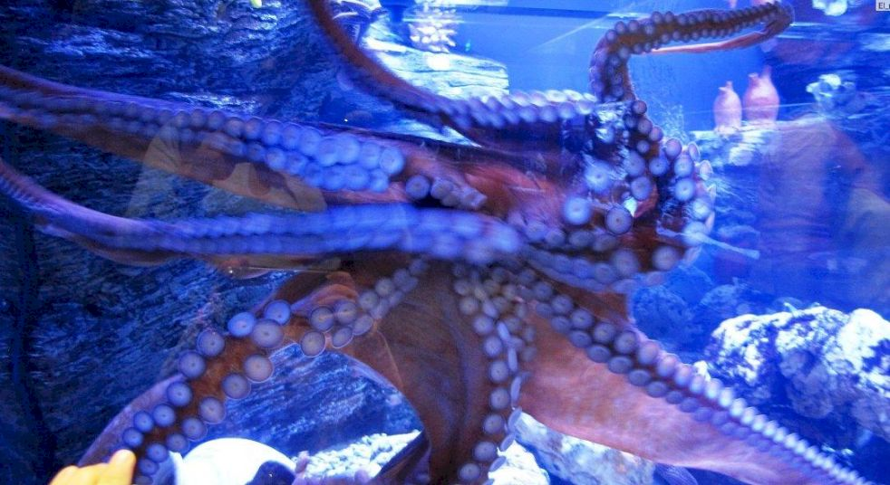 День Рождения в Океанариуме «Подводные приключения»