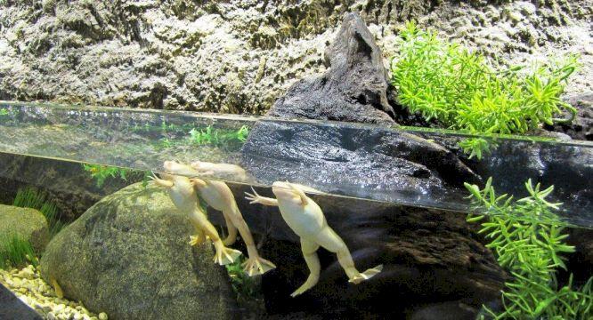 День Рождения в Крокус Сити Океанариуме «Подводные приключения»