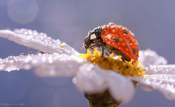 Цикл занятий с микроскопом для детей онлайн (6-11 лет) «Удивительная красота микромира» (12 занятий)