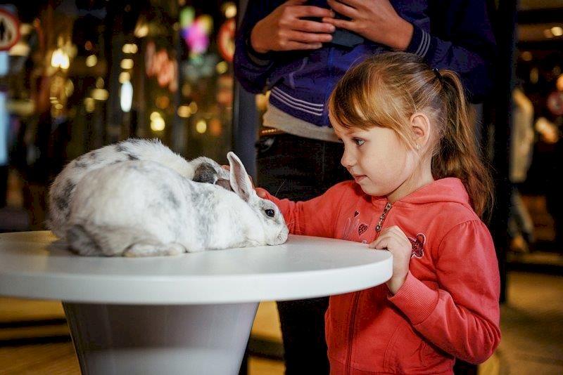 День Рождения с выездным шоу с животными «Мохнатые и ушастые поздравления!»